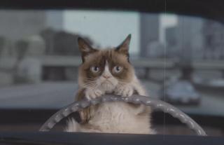 Grumpy Cat Behind a Car