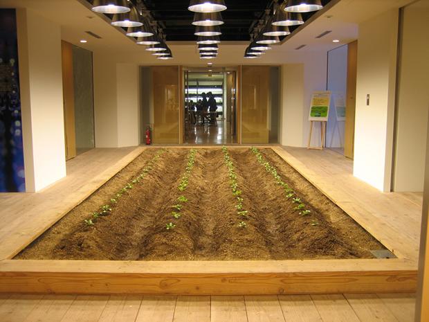 Pasona Farm - Seedlings