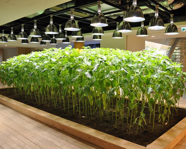 Pasona Farm - Urban Farm