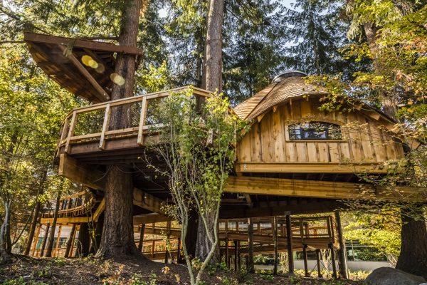 Microsoft Treehouse Office